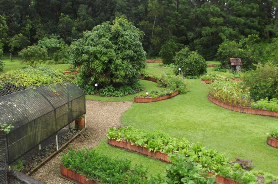 Mavis's organic garden
